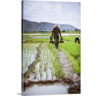 """Farmer at work in rice paddy, North Vietnam"" Canvas Wall Art"