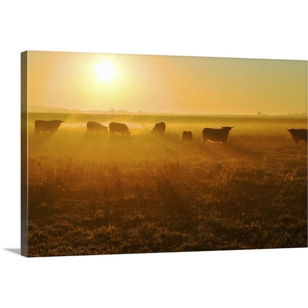 """""""Herd of bull in field at sunset."""" Canvas Wall Art"""