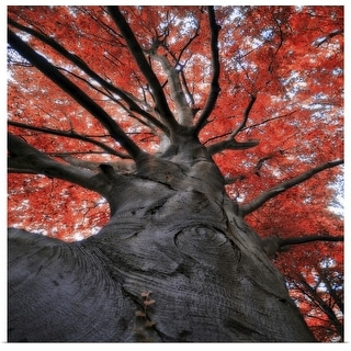 """Red tree in autumn"" Poster Print"