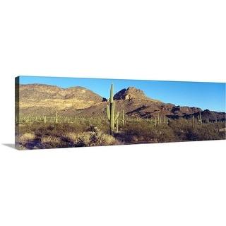"""Cactus in a desert, Organ Pipe Cactus National Park, Arizona"" Canvas Wall Art"