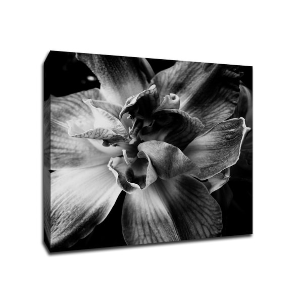Black and white flower flowers 20x20 gallery wrapped canvas wall black and white flower flowers 20x20 gallery wrapped canvas wall art mightylinksfo