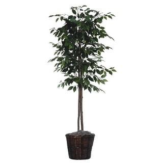 6' Ficus tree