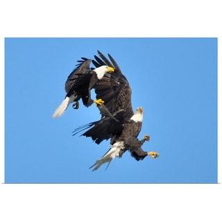 """Bald eagles' challenge"" Poster Print"