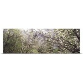 Poster Print entitled Dogwood trees blooming in a forest, Yosemite National Park, California,