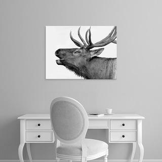 Easy Art Prints PhotoINC Studio's 'Deer' Premium Canvas Art