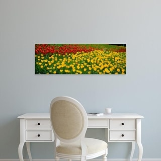 Easy Art Prints Panoramic Images's 'Tulip flowers growing in a field, Lake Constance, Germany' Premium Canvas Art