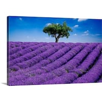 Premium Thick-Wrap Canvas entitled Lavender field in summer with one tree. Haute Provence, France