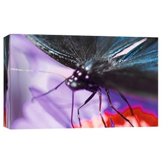 "PTM Images 9-101881  PTM Canvas Collection 8"" x 10"" - ""Butterfly Az 6"" Giclee Butterflies Art Print on Canvas"