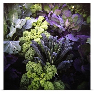 Poster Print entitled Winter kale and purple sprouting broccoli