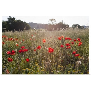 """Field of poppy flowers"" Poster Print"