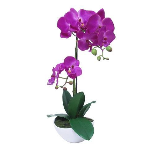 Phalaenopsis Orchid Flower Arrangement in Pot 16in