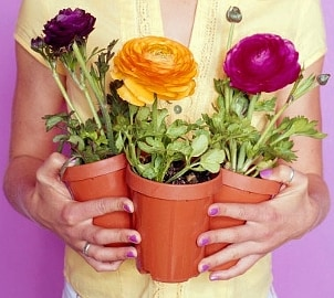 Woman wearing two gold rings and holding three pots of flowers