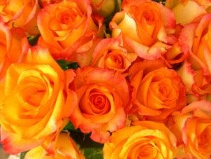 Orange fragrance roses