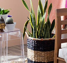 floor plants and succulents boho style furniture