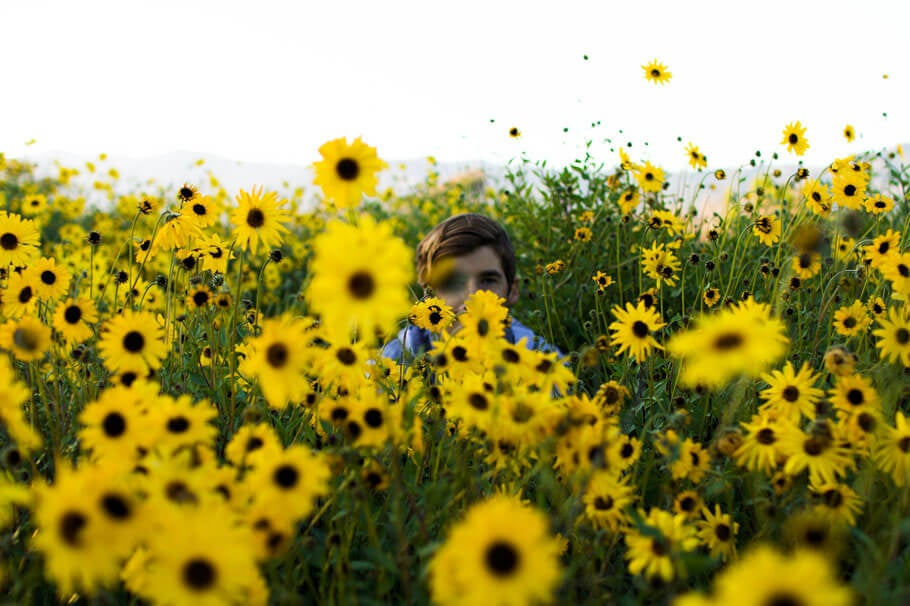 Picture of a person hiding in a patch of sunflowers