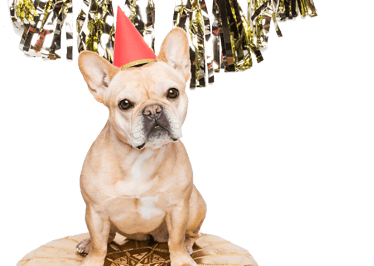 Dog Celebrating New Year