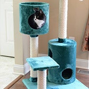Select Cat Trees & Beds