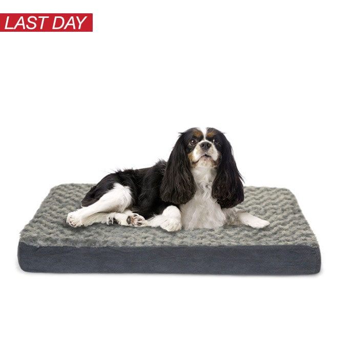 Up to 35% off Select Early Gifts from Santa Paws*
