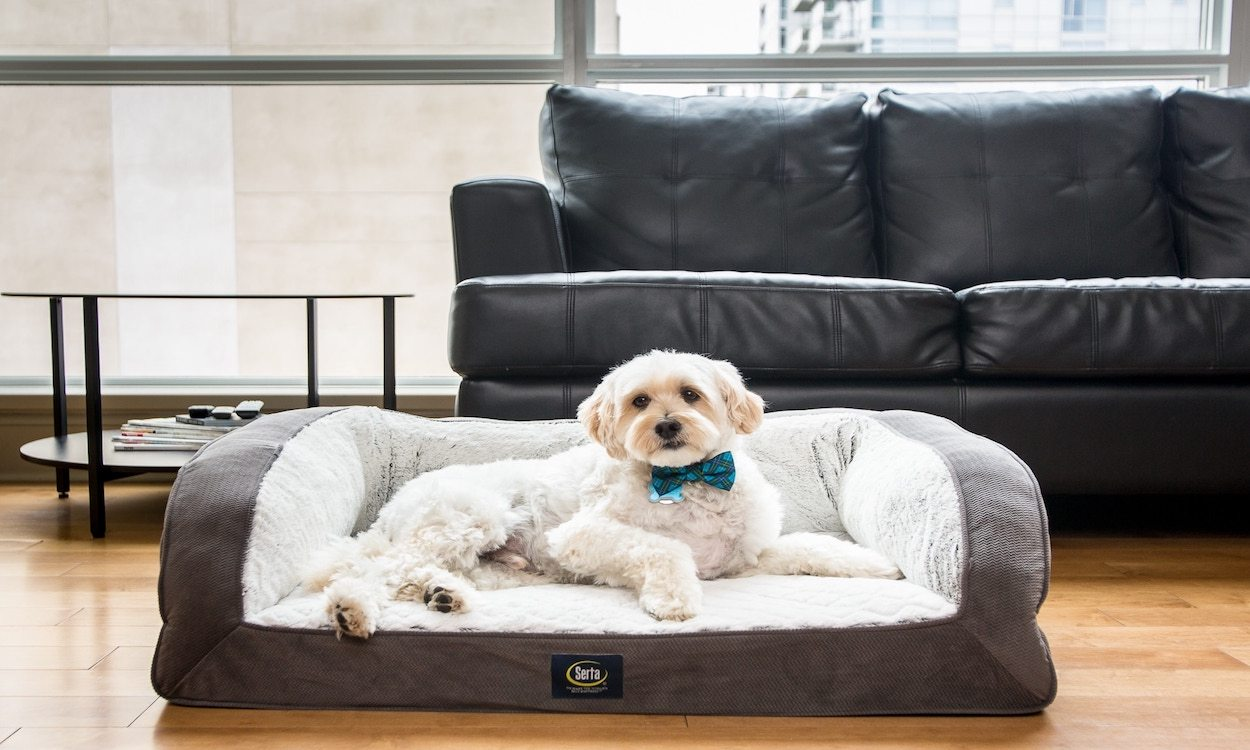 Best Dog Beds For Small Dogs Overstock Com