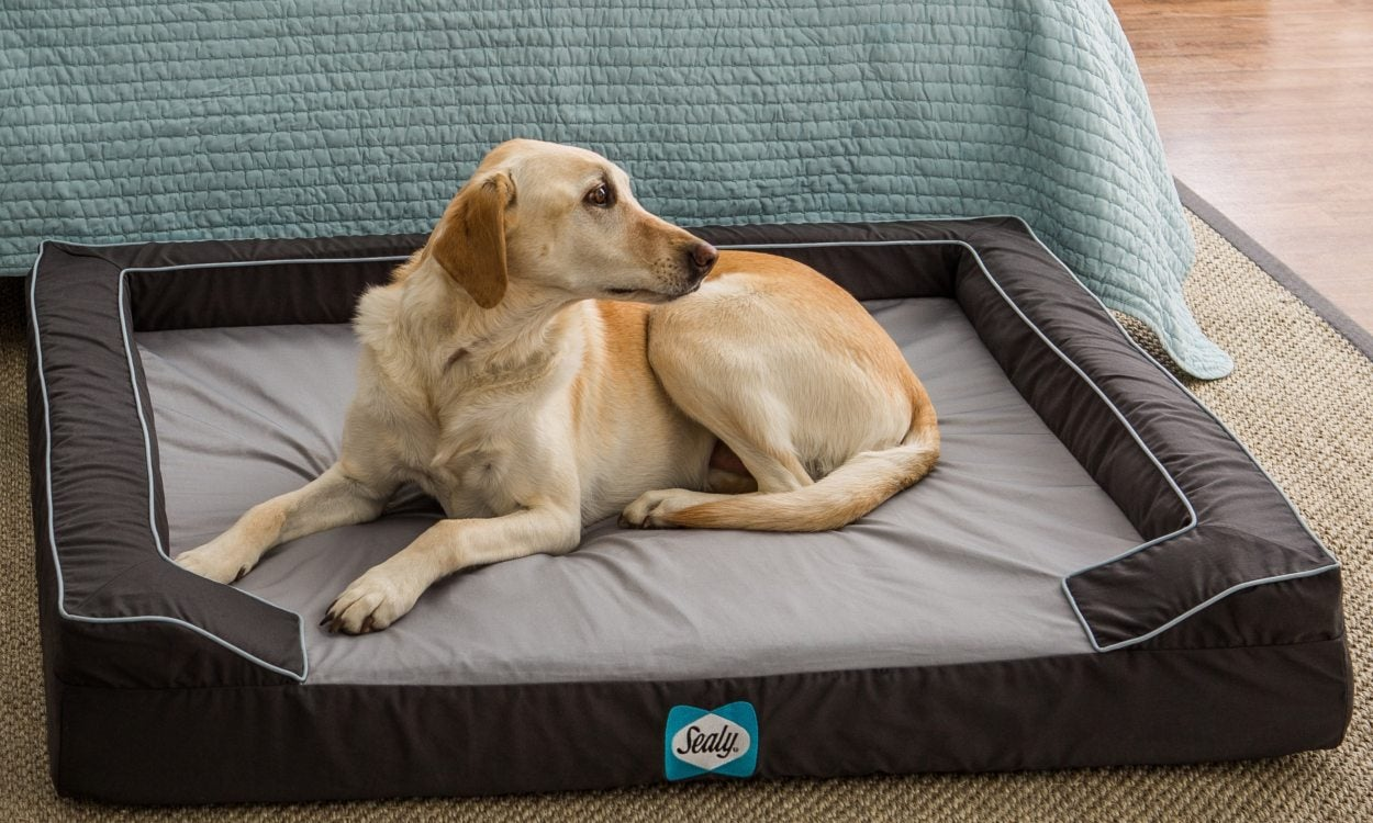 Top 5 Tips on Choosing a Pet Bed