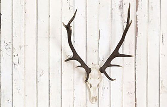 Rustic antlers