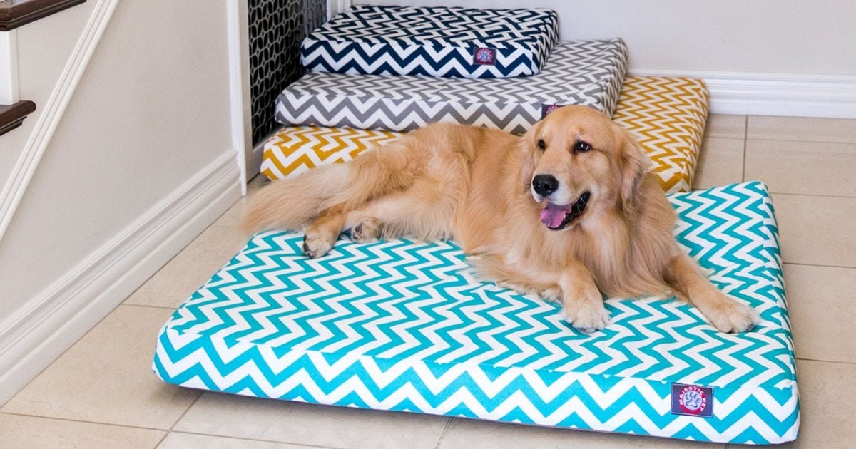 5 Steps To Clean A Large Dog Bed