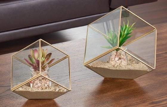 two glass geometric terrariums on wooden coffee table Mid-Century Modern Living Room Ideas