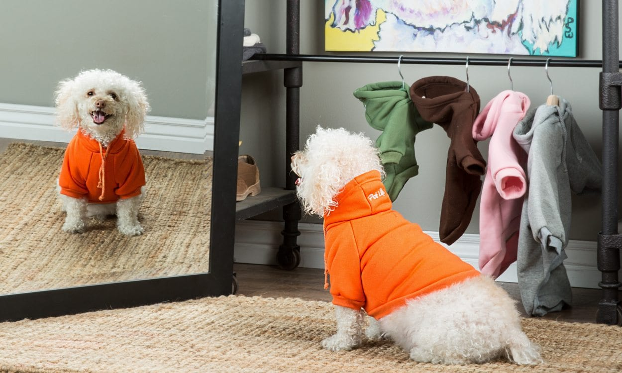 How to Measure Your Dog for Clothes
