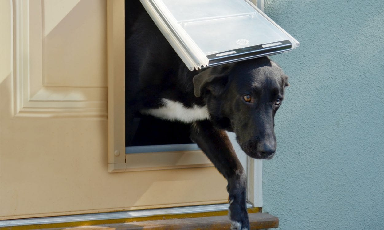 How To Pick The Right Dog Door Size Overstock