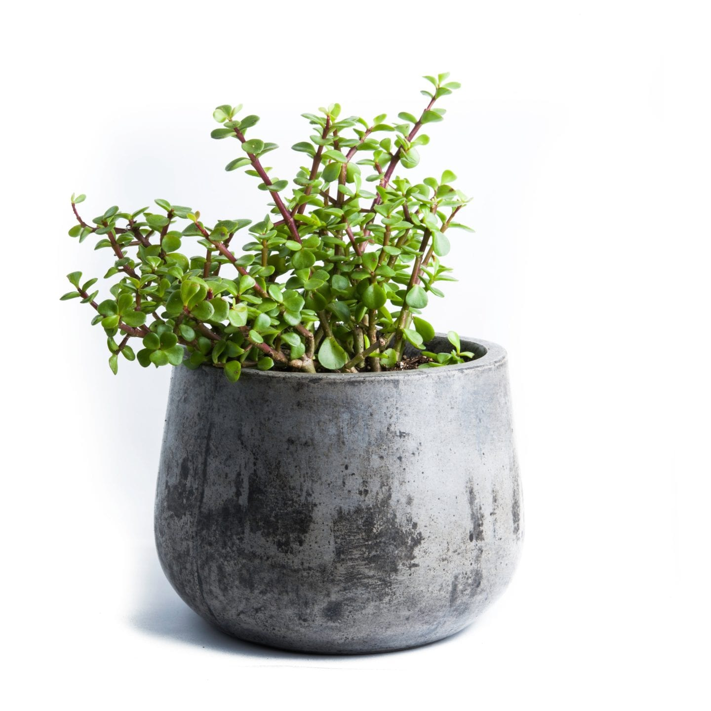 Cement planter with greenery.