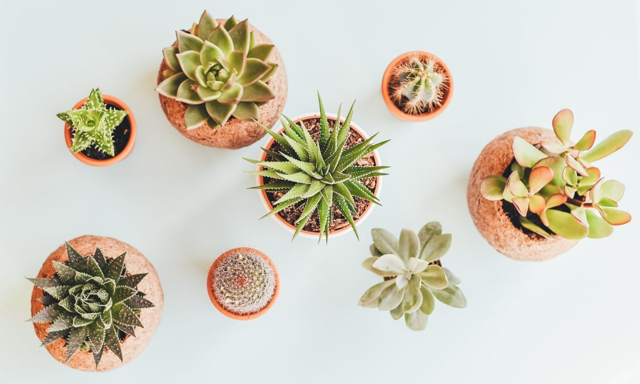 7 Best Fake Plants for Decorating Your Home | Overstock.com